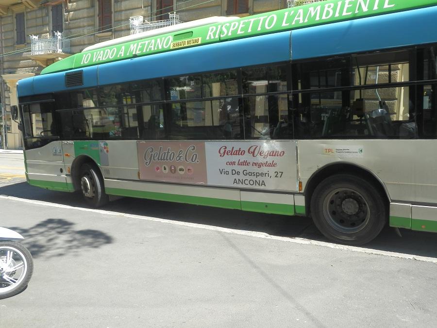 tabella bus 300x70